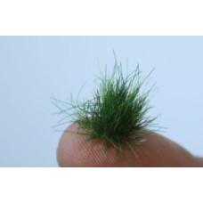 Green tufts grass and grass mats
