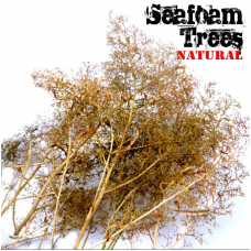 Seafoam Plants